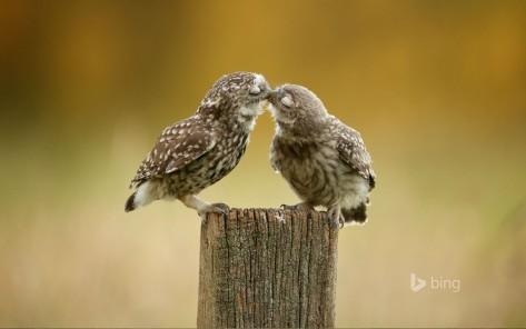 O Amor esta no ar! ♥
