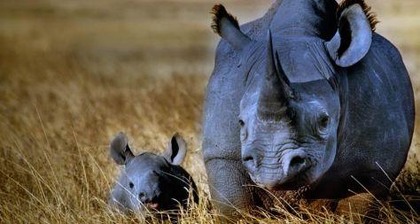 Mãe Rinoceronte negro com seu bebê no Ngorongo Crater, Tanzânia! ♥