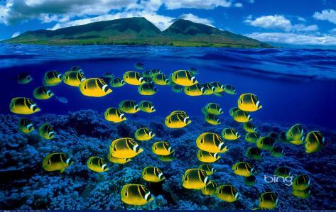 Peixes sobre a água no Hawaii! Natureza é linda, como eu amo. ♥